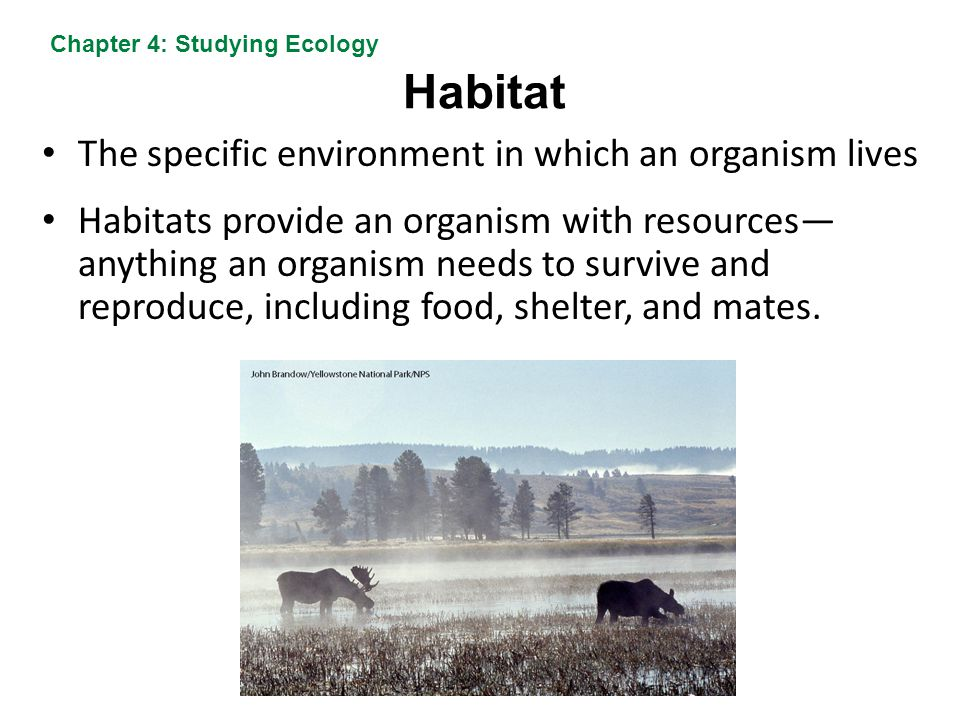 Habitat The specific environment in which an organism lives