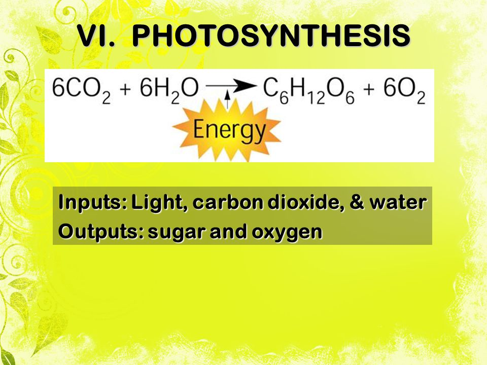 VI. PHOTOSYNTHESIS Inputs: Light, carbon dioxide, & water