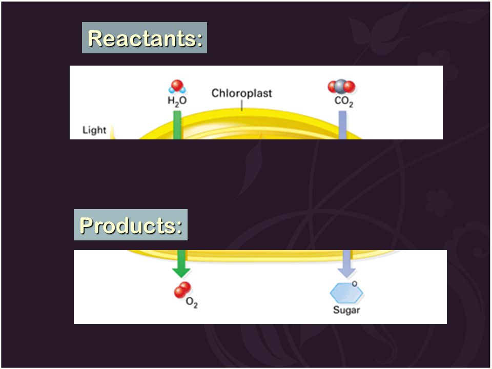 Reactants: Products: