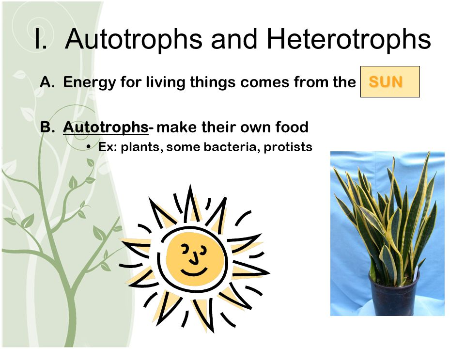 I. Autotrophs and Heterotrophs