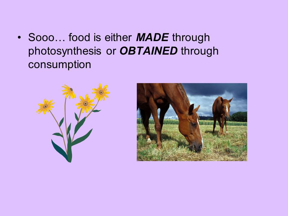 Sooo… food is either MADE through photosynthesis or OBTAINED through consumption