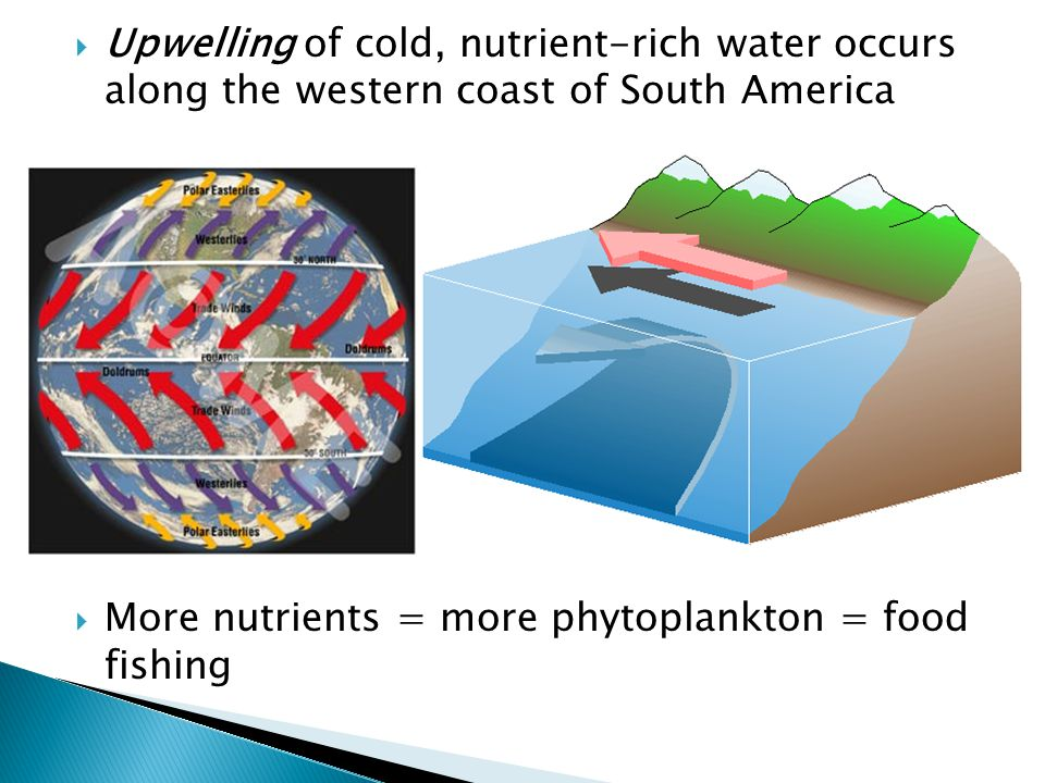 Upwelling of cold, nutrient-rich water occurs along the western coast of South America