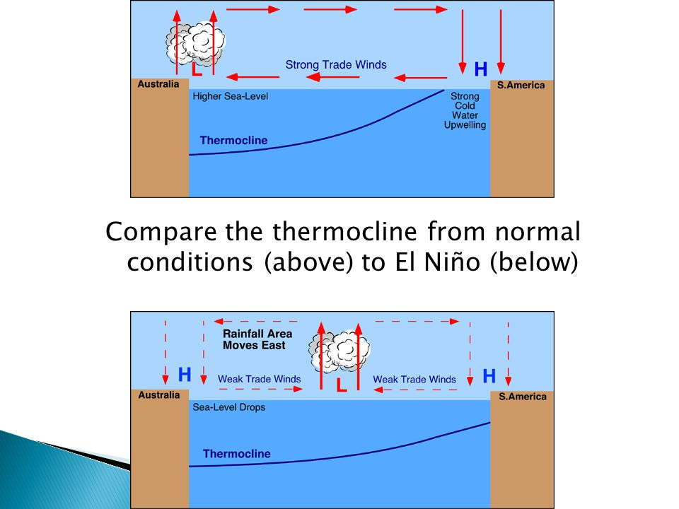 Compare the thermocline from normal conditions (above) to El Niño (below)
