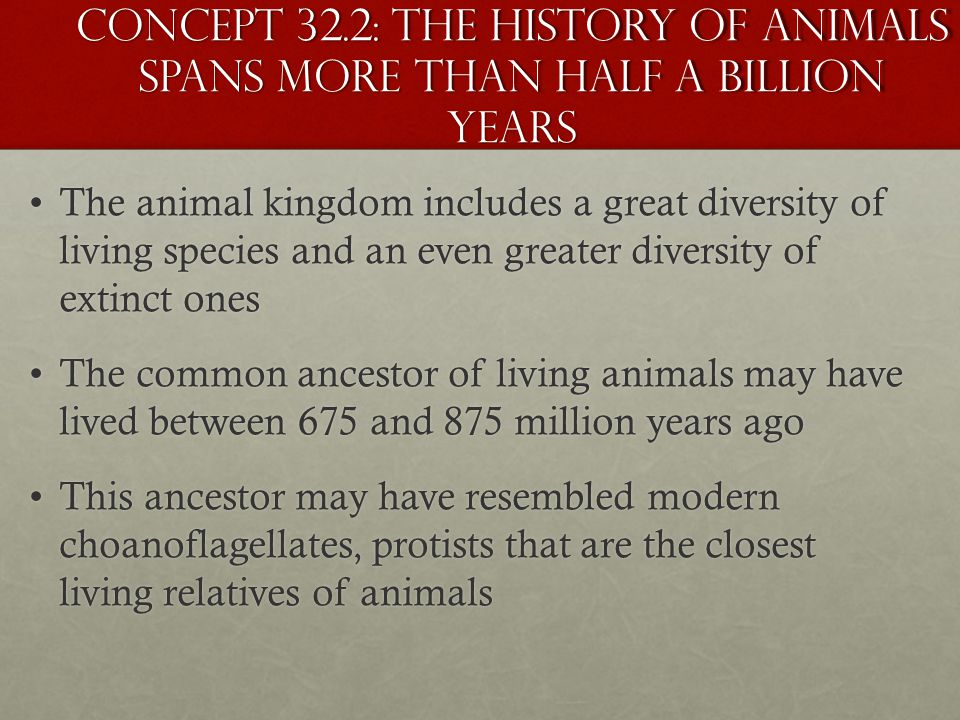 Concept 32.2: The history of animals spans more than half a billion years
