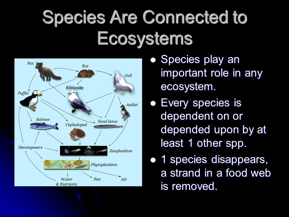 Species Are Connected to Ecosystems