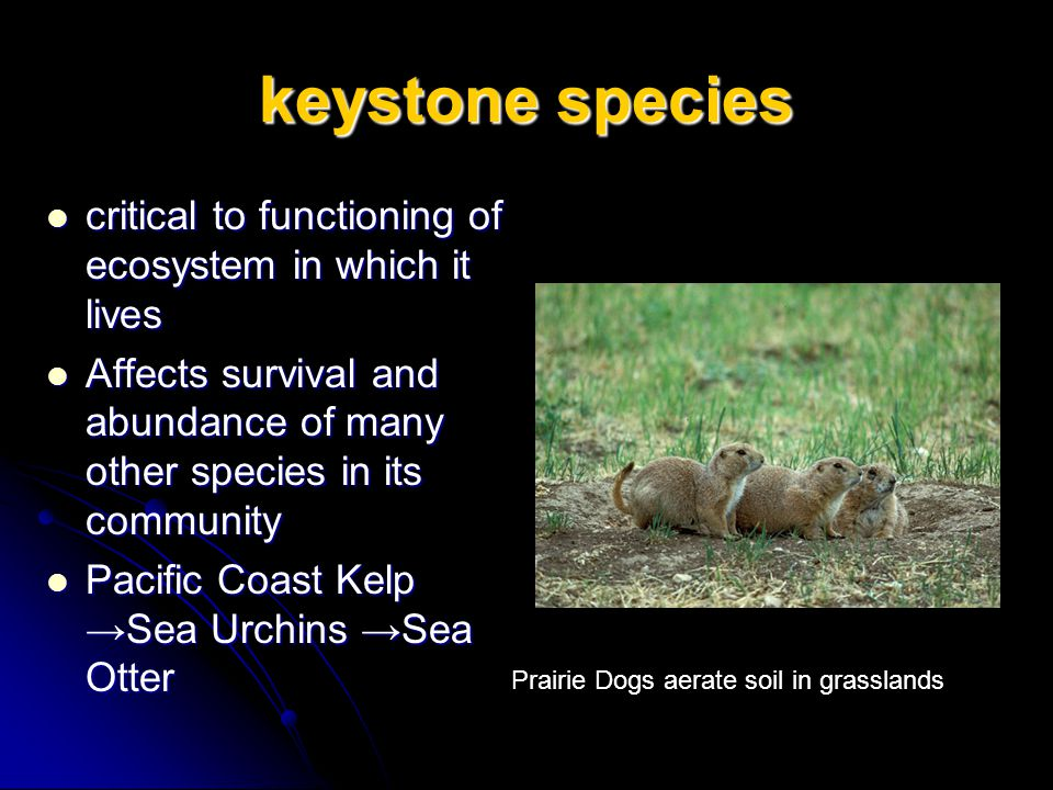 keystone species critical to functioning of ecosystem in which it lives. Affects survival and abundance of many other species in its community.