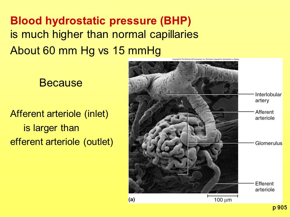 Blood hydrostatic pressure (BHP) is much higher than normal capillaries