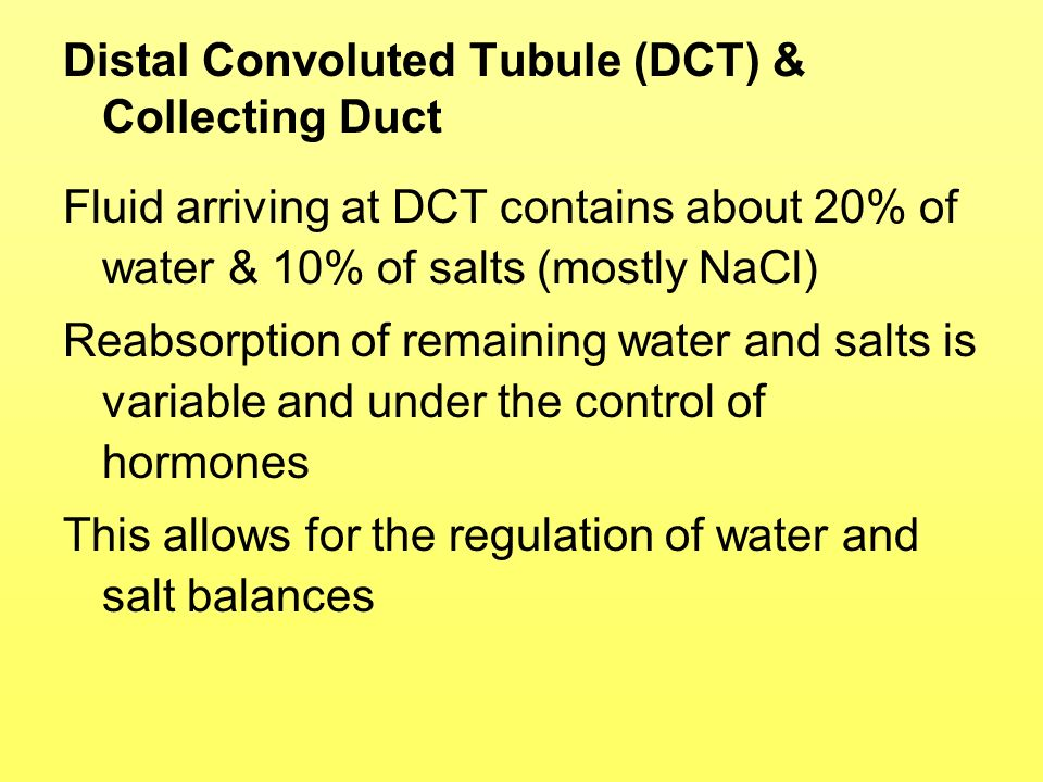 Distal Convoluted Tubule (DCT) & Collecting Duct