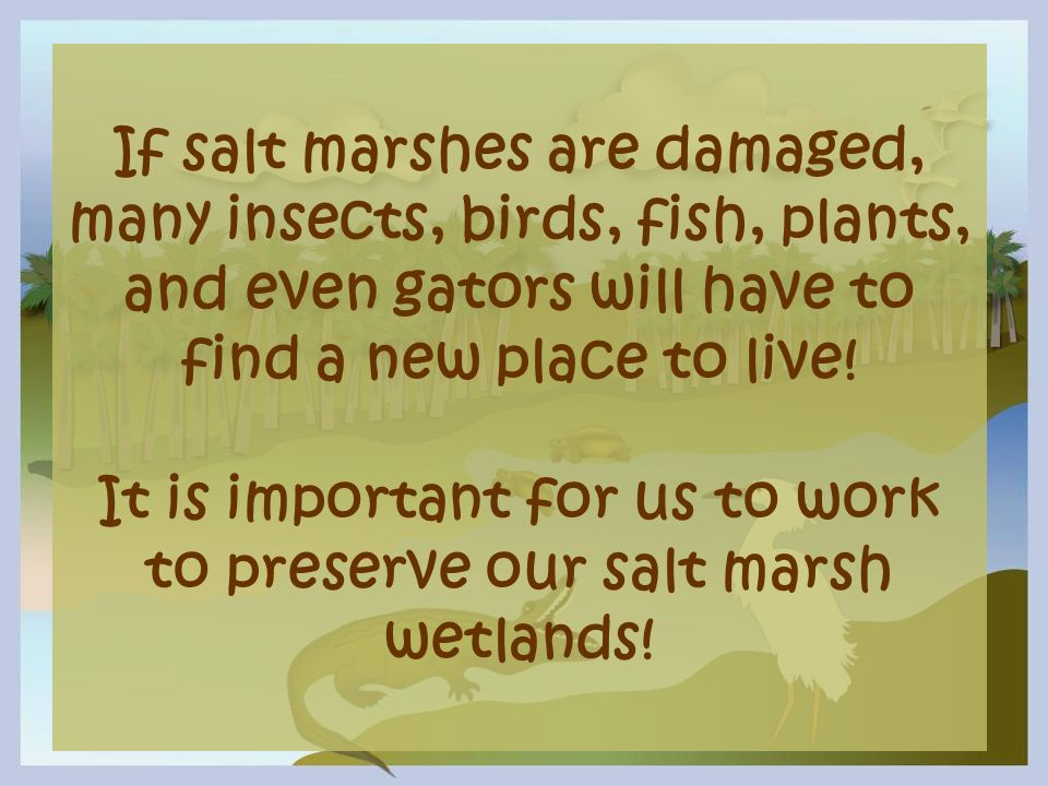 If salt marshes are damaged, many insects, birds, fish, plants, and even gators will have to find a new place to live.