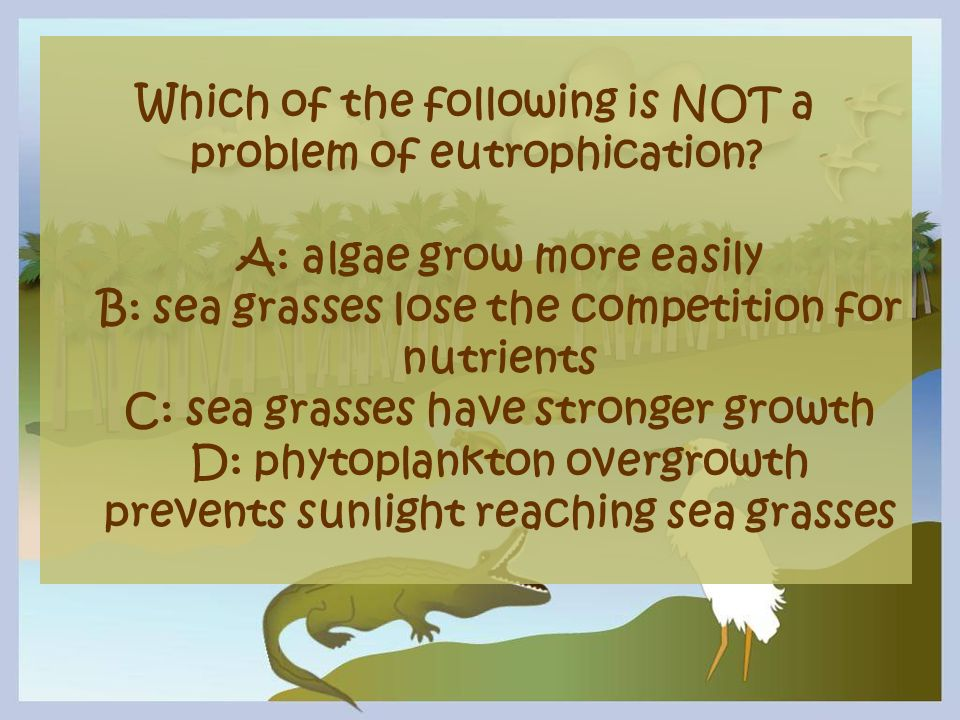 Which of the following is NOT a problem of eutrophication