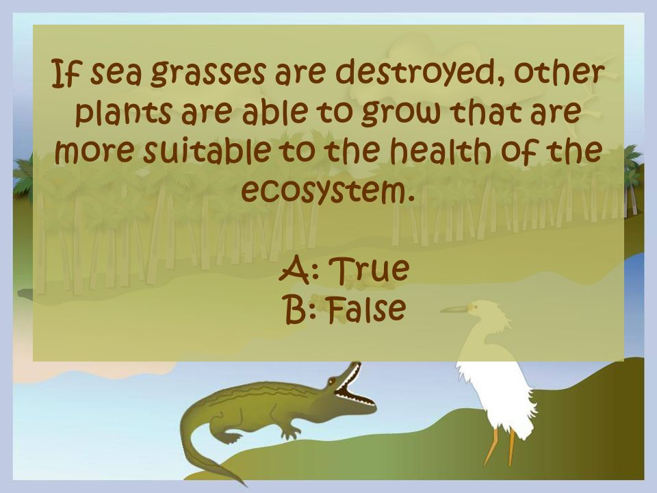 If sea grasses are destroyed, other plants are able to grow that are more suitable to the health of the ecosystem.