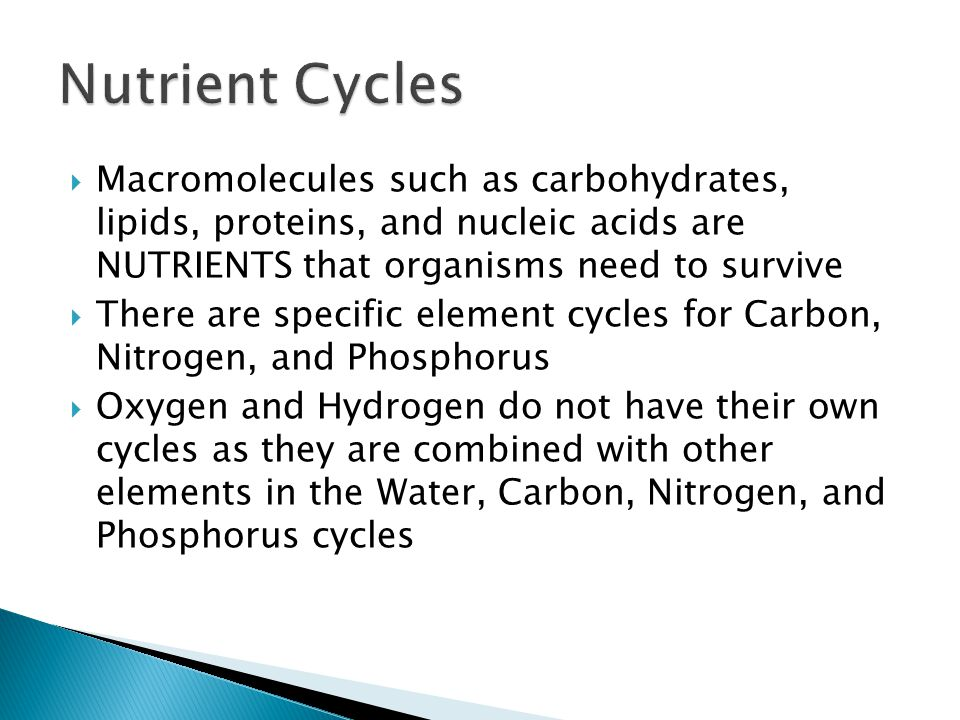 Nutrient Cycles Macromolecules such as carbohydrates, lipids, proteins, and nucleic acids are NUTRIENTS that organisms need to survive.