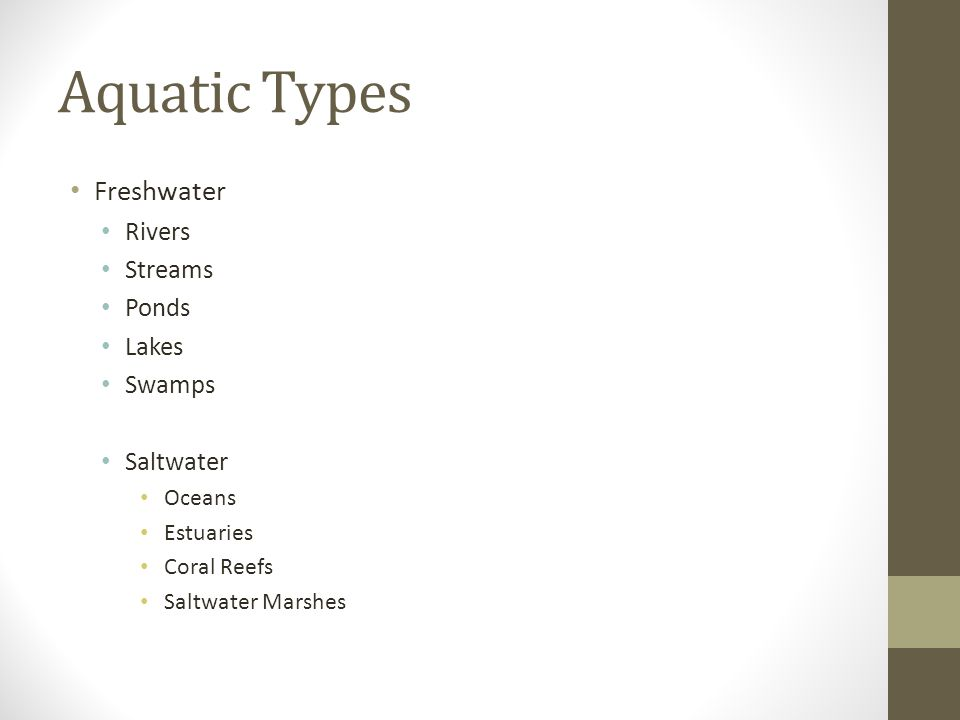 Aquatic Types Freshwater Rivers Streams Ponds Lakes Swamps Saltwater