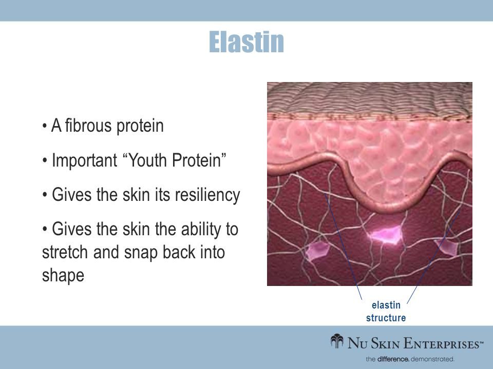 Elastin Important Youth Protein Gives the skin its resiliency