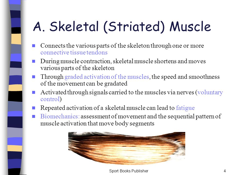 A. Skeletal (Striated) Muscle