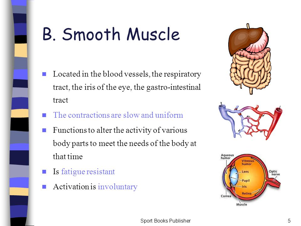 B. Smooth Muscle Located in the blood vessels, the respiratory tract, the iris of the eye, the gastro-intestinal tract.