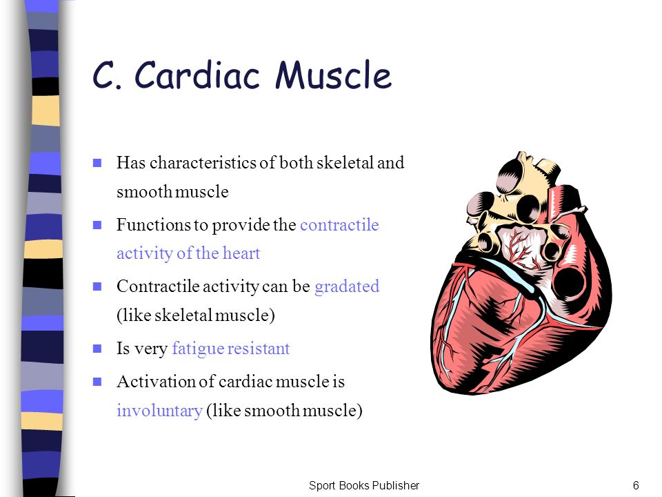 C. Cardiac Muscle Has characteristics of both skeletal and smooth muscle. Functions to provide the contractile activity of the heart.