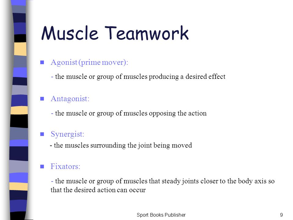 Muscle Teamwork Agonist (prime mover): - the muscle or group of muscles producing a desired effect.