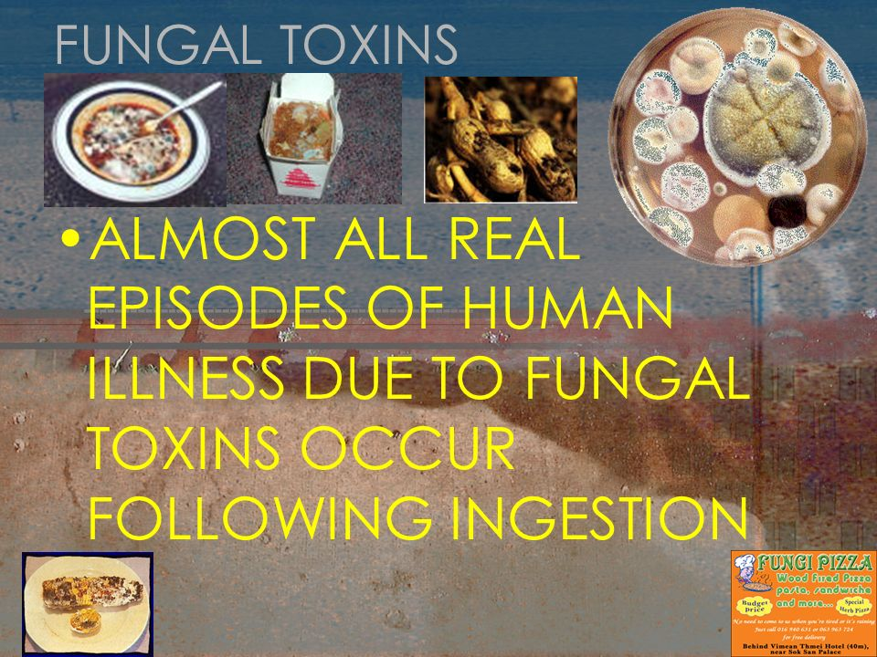 FUNGAL TOXINS ALMOST ALL REAL EPISODES OF HUMAN ILLNESS DUE TO FUNGAL TOXINS OCCUR FOLLOWING INGESTION.
