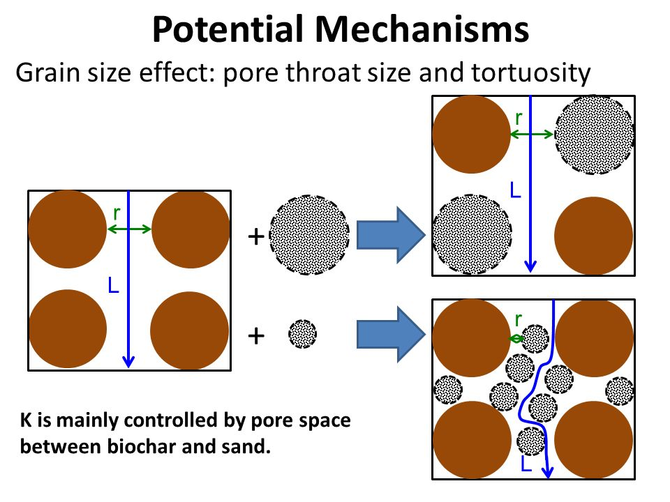 Potential Mechanisms + +