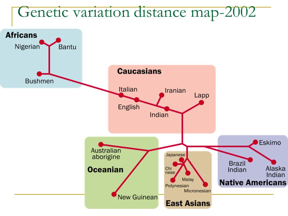 Genetic variation distance map-2002