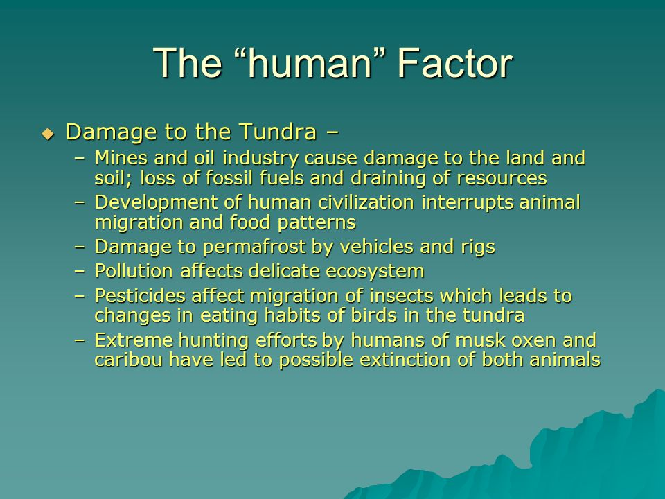 The human Factor Damage to the Tundra –