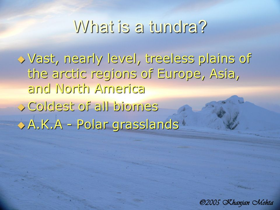 What is a tundra Vast, nearly level, treeless plains of the arctic regions of Europe, Asia, and North America.