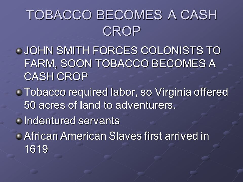 TOBACCO BECOMES A CASH CROP