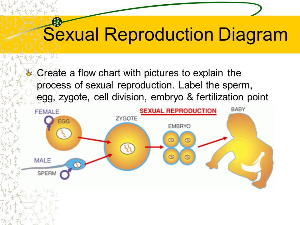 Sexual reproduction illustration