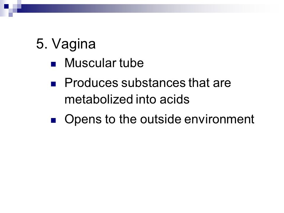 5. Vagina Muscular tube. Produces substances that are metabolized into acids.
