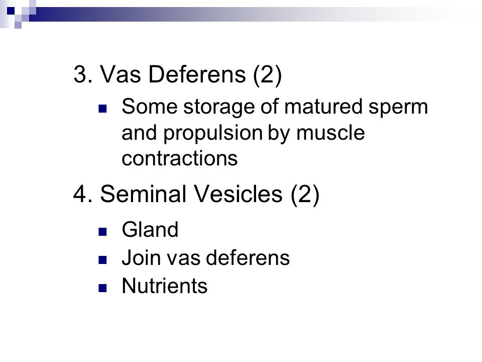 3. Vas Deferens (2) 4. Seminal Vesicles (2)