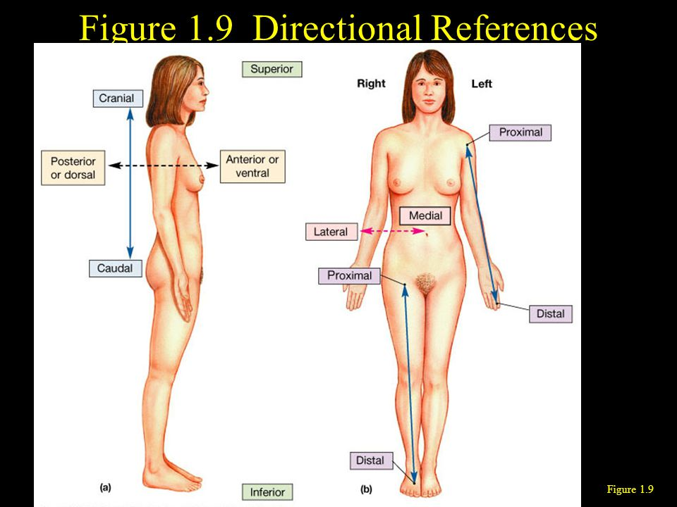 Figure 1.9 Directional References