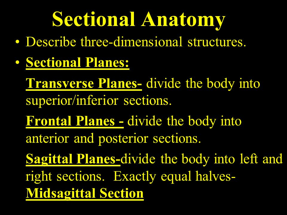 Sectional Anatomy Describe three-dimensional structures.