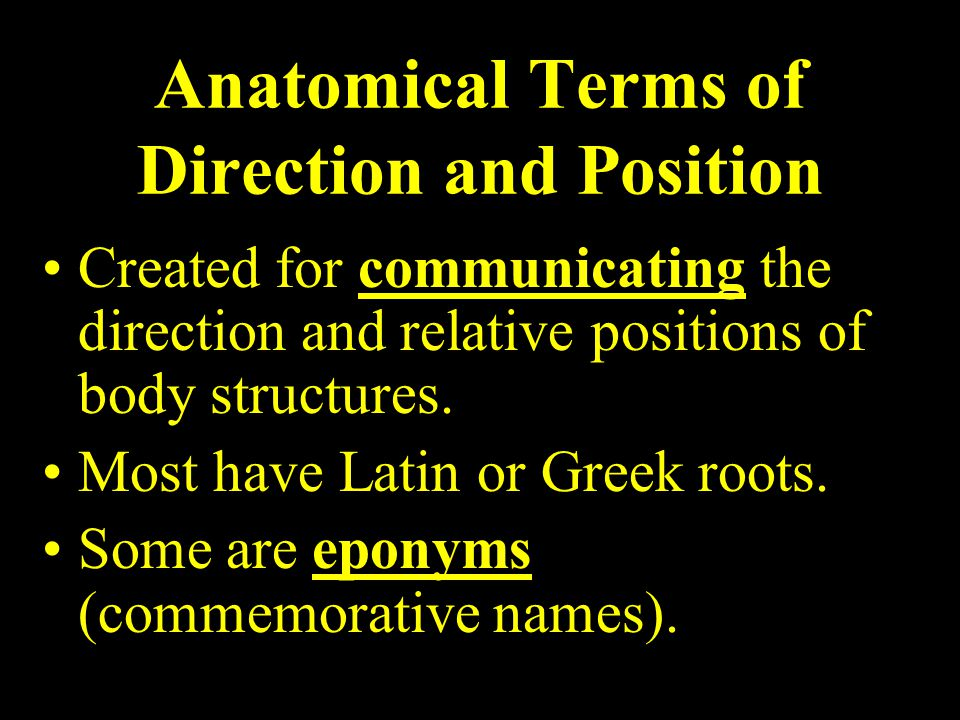 Anatomical Terms of Direction and Position