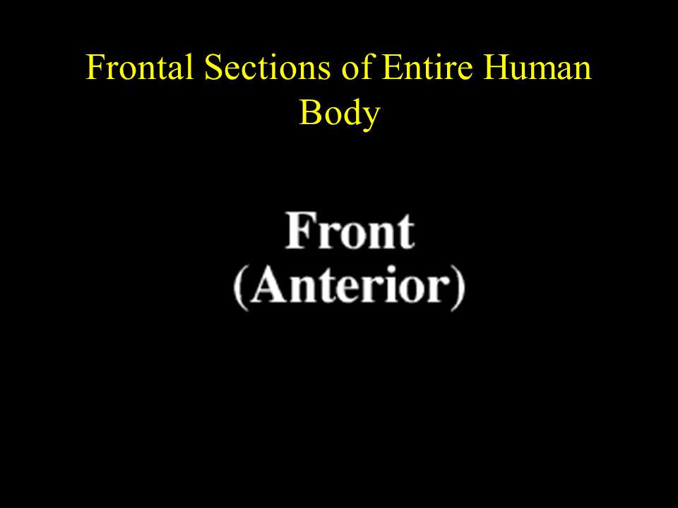Frontal Sections of Entire Human Body