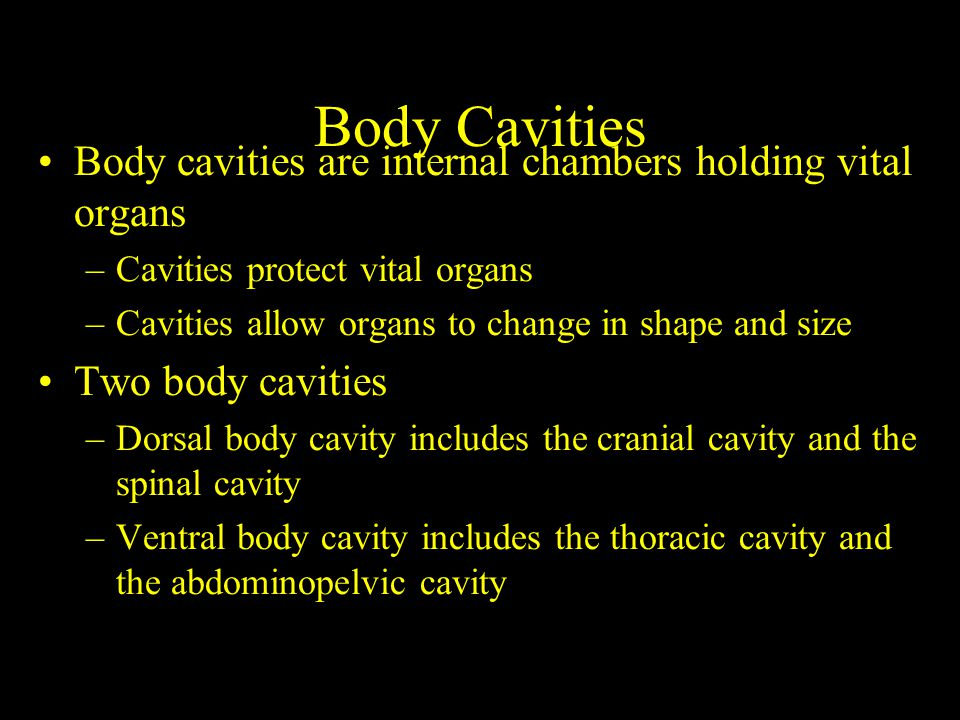Body Cavities Body cavities are internal chambers holding vital organs