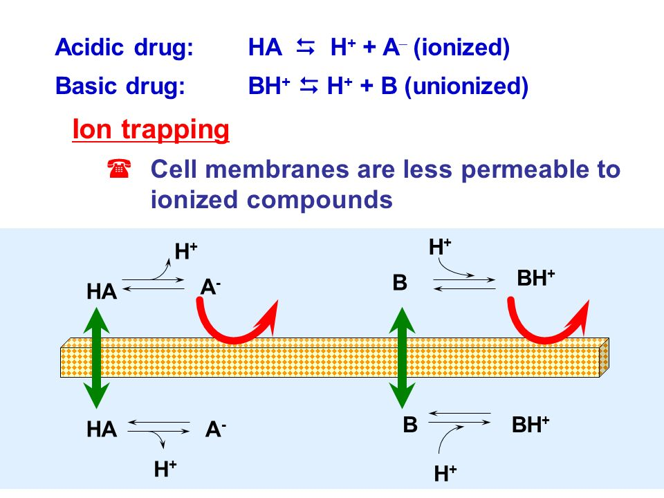 Ion trapping Cell membranes are less permeable to ionized compounds