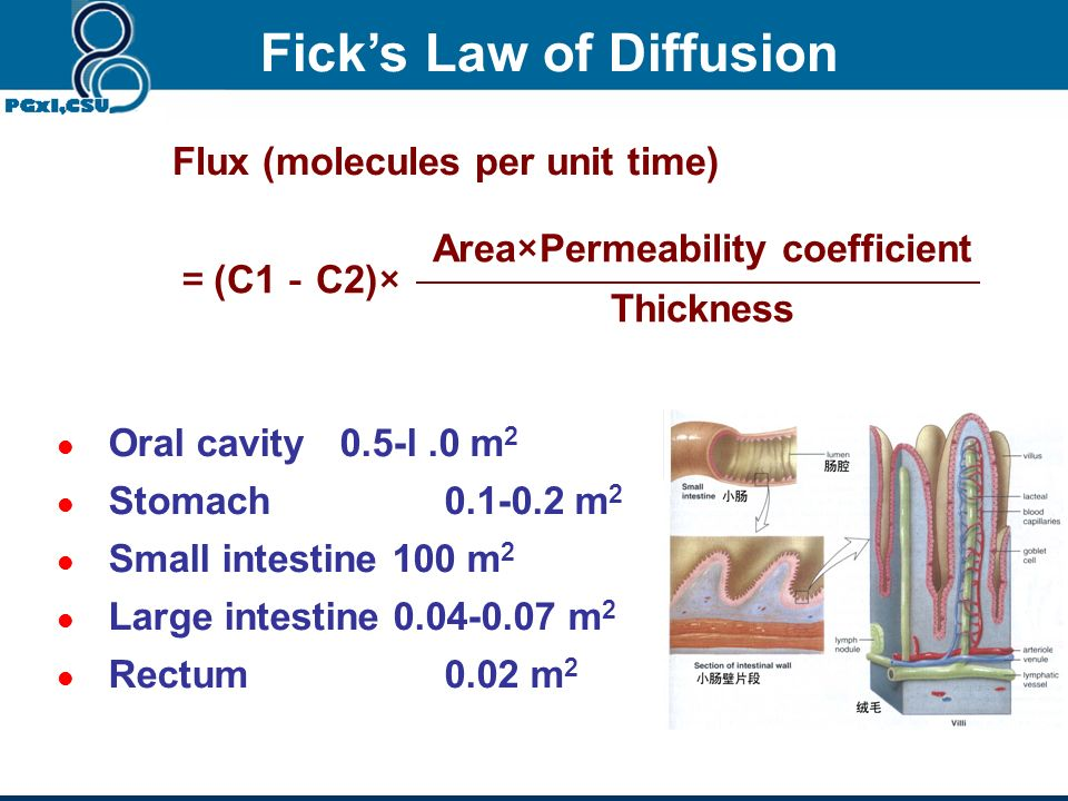Fick's Law of Diffusion Area×Permeability coefficient