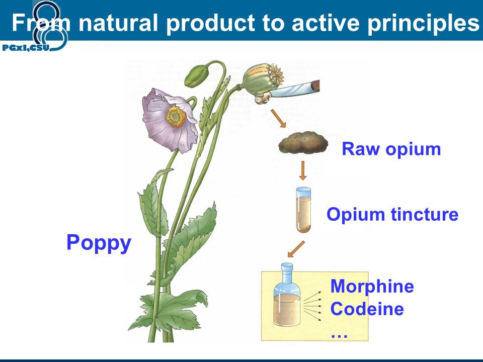 From natural product to active principles