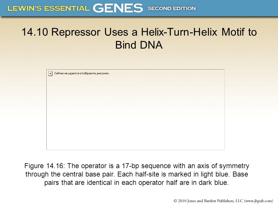 14.10 Repressor Uses a Helix-Turn-Helix Motif to Bind DNA
