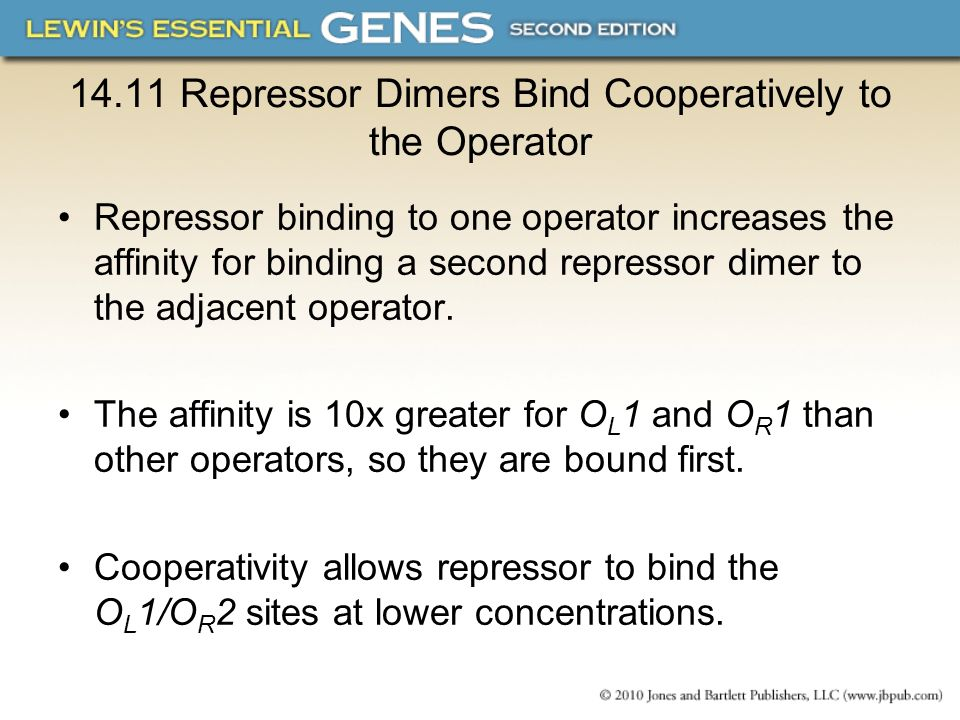 14.11 Repressor Dimers Bind Cooperatively to the Operator