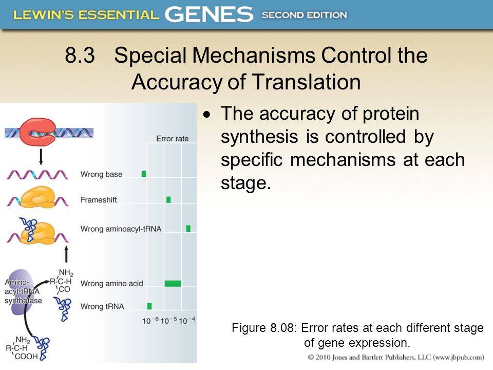 8.3 Special Mechanisms Control the Accuracy of Translation