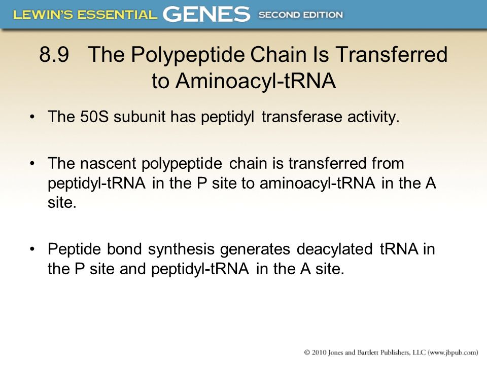 8.9 The Polypeptide Chain Is Transferred to Aminoacyl-tRNA