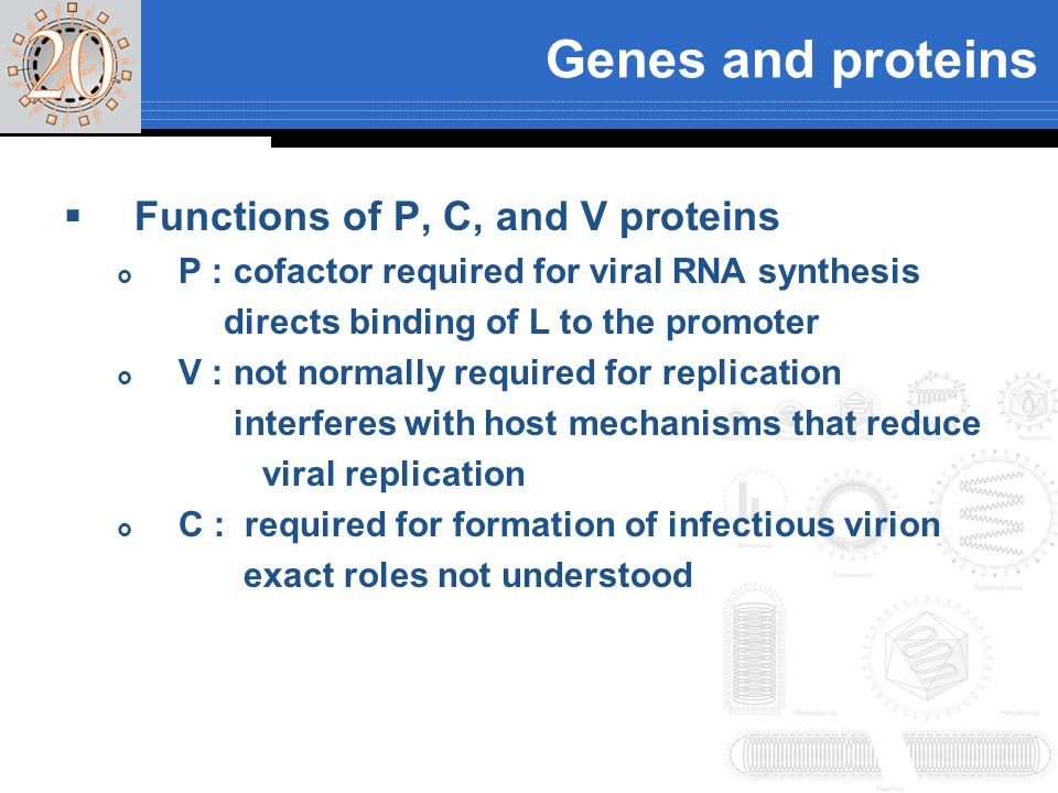 Genes and proteins Functions of P, C, and V proteins