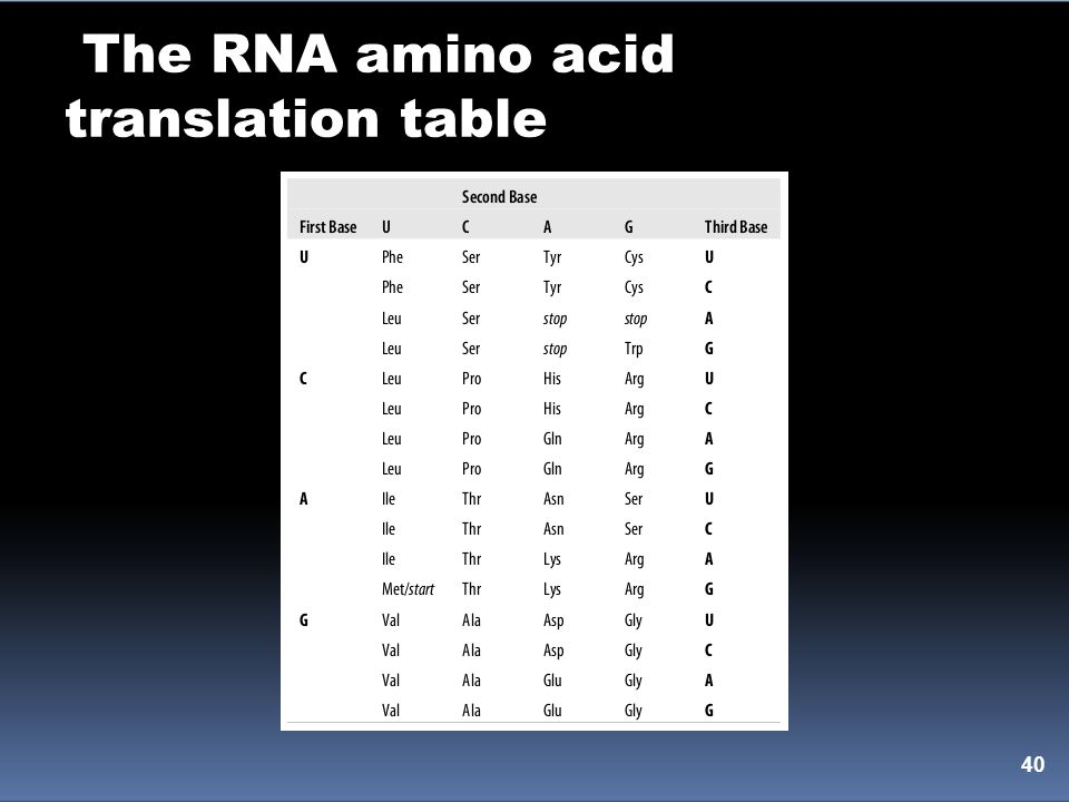 The RNA amino acid translation table