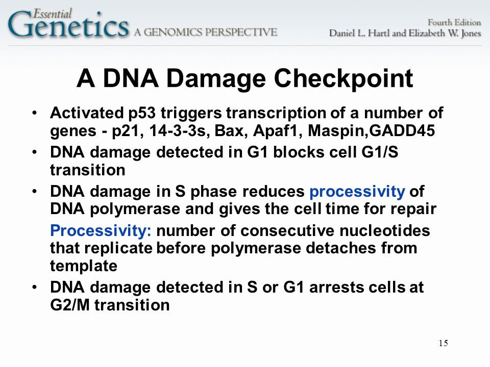 A DNA Damage Checkpoint
