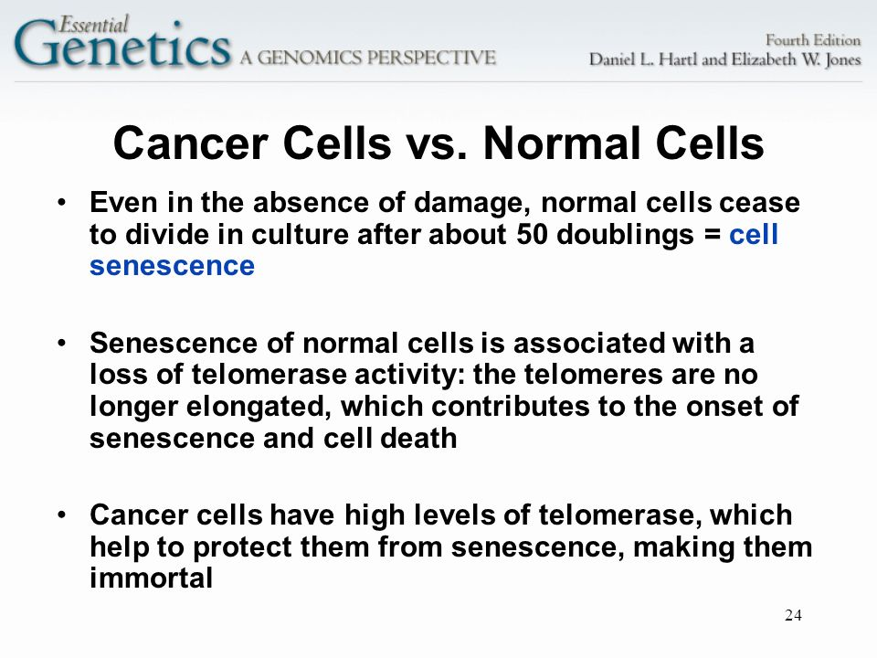 Cancer Cells vs. Normal Cells