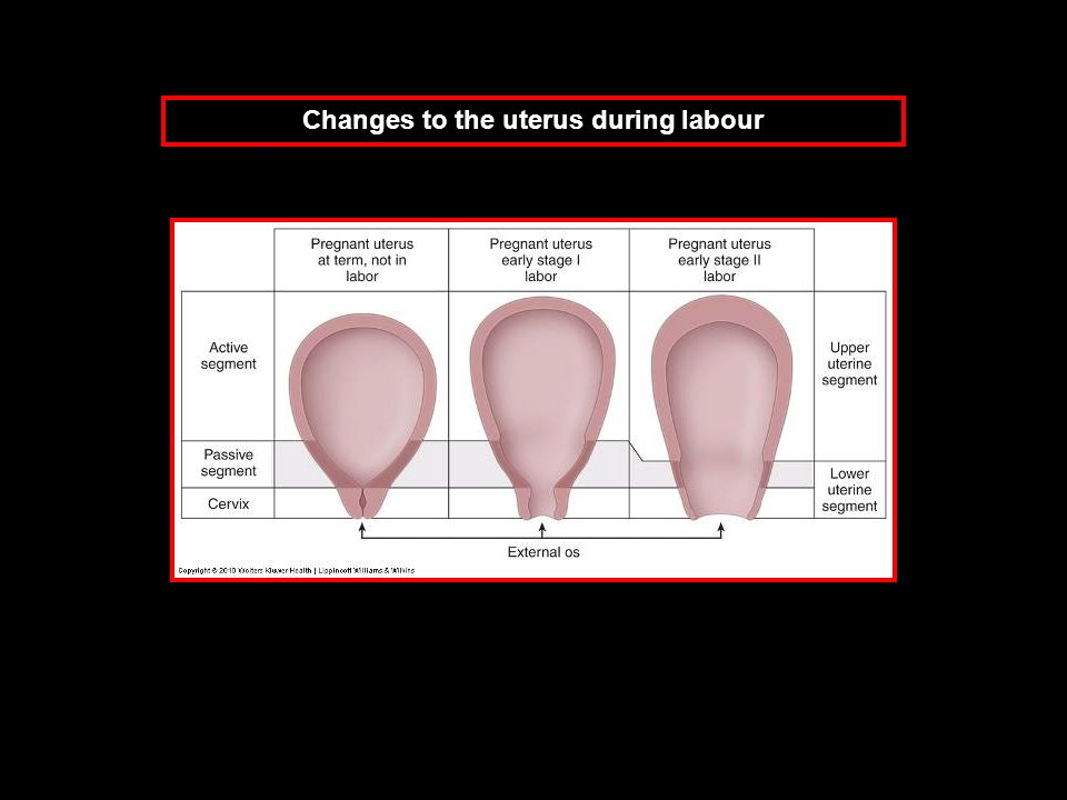 Changes to the uterus during labour