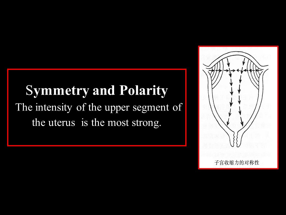Symmetry and Polarity The intensity of the upper segment of the uterus is the most strong.