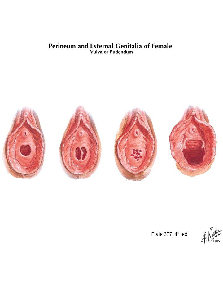Anatomy of hymen membrane
